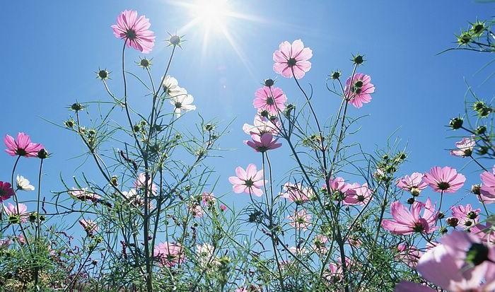 Aug 23 Blue_Sky_Flowers_HM031_350A